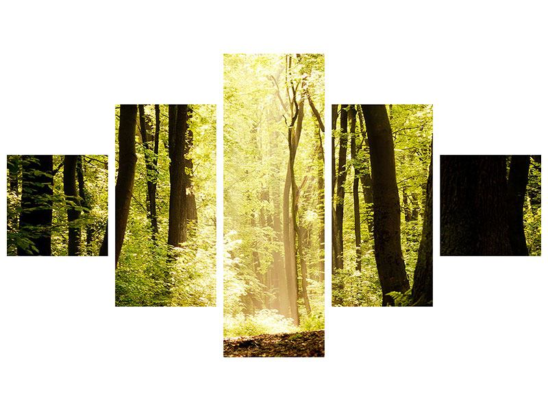 Poster 5-teilig Sonnenaufgang im Wald