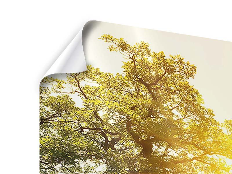 Poster 5-teilig Sonnenuntergang in der Natur