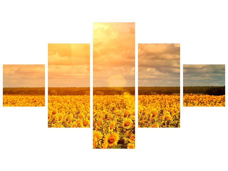 Poster 5-teilig Goldenes Licht für Sonnenblumen