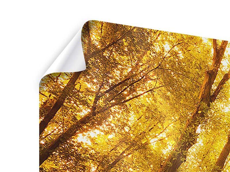 Poster 5-teilig Herbstwald