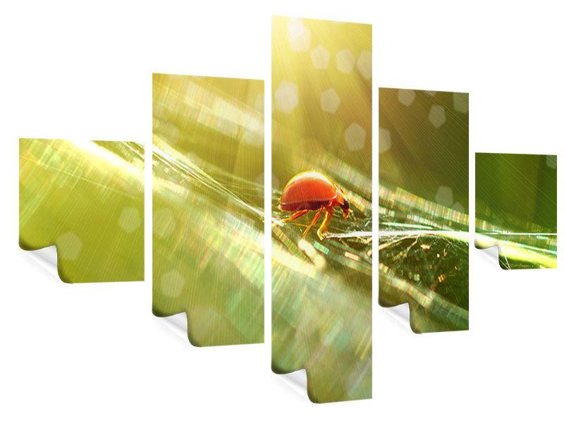 Poster 5-teilig Marienkäfer im Sonnenlicht