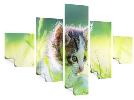 Poster 5-teilig Kitten