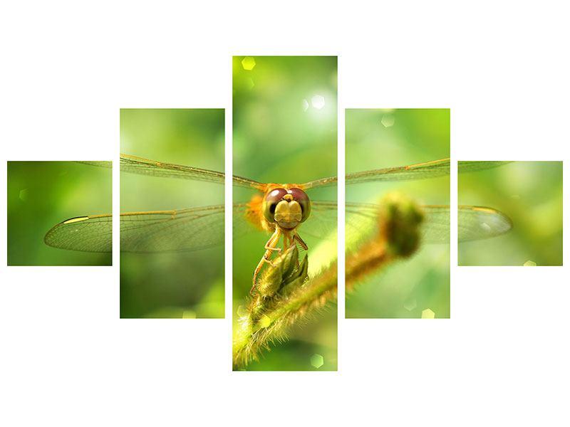Poster 5-teilig XXL-Libelle