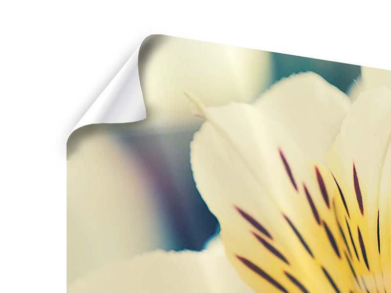 Poster 5-teilig Tigerlilien