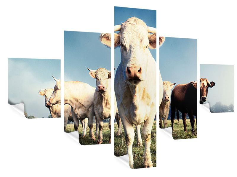 Poster 5-teilig Kühe