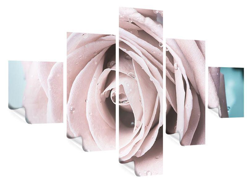 Poster 5-teilig Pastellrose