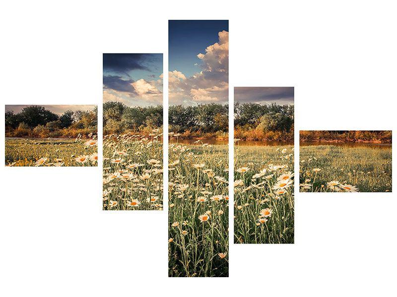 Poster 5-teilig modern Die Wiesenmargerite am Fluss
