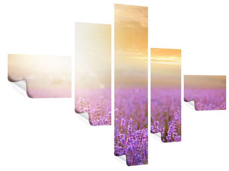 Poster 5-teilig modern Sonnenuntergang beim Lavendelfeld