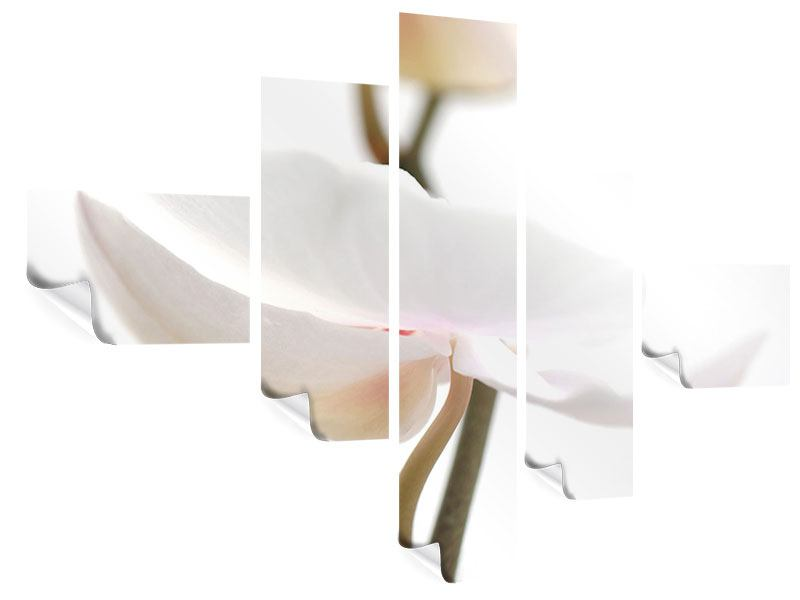 Poster 5-teilig modern XXL Orchideenblüte