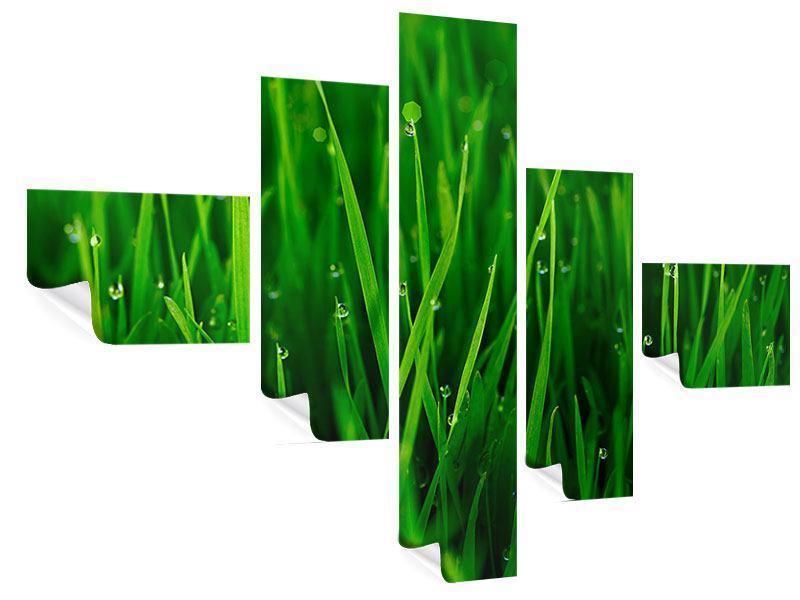 Poster 5-teilig modern Gras mit Morgentau
