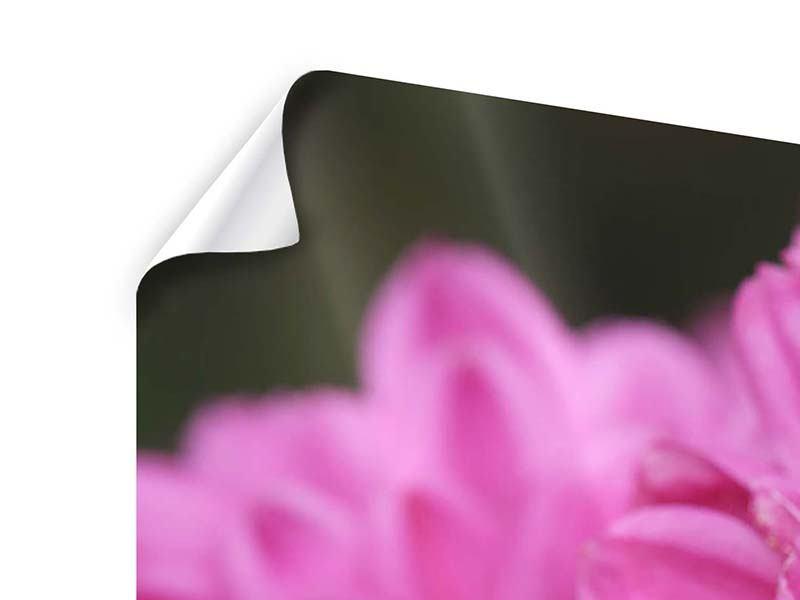 Poster 5-teilig modern Chrysanthemen