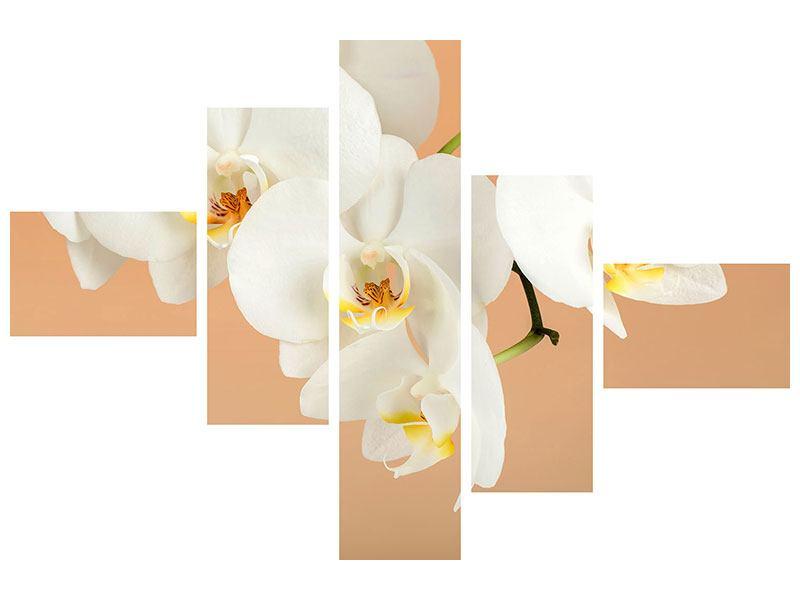 Poster 5-teilig modern Weisse Orchideenblüten