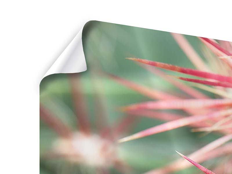 Poster 5-teilig modern Die Kaktusblüte