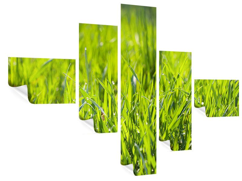 Poster 5-teilig modern Gras im Morgentau