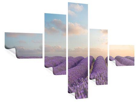 Poster 5-teilig modern Das blühende Lavendelfeld