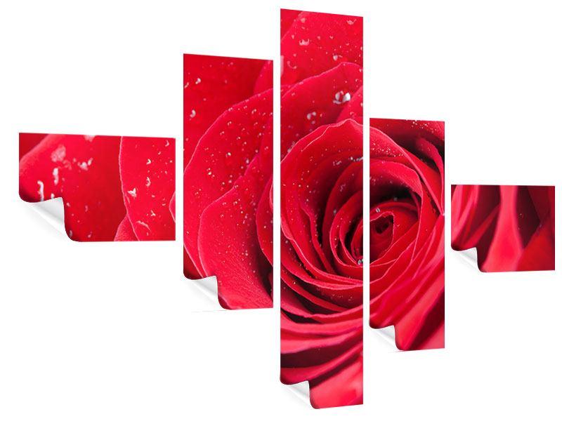 Poster 5-teilig modern Rote Rose im Morgentau