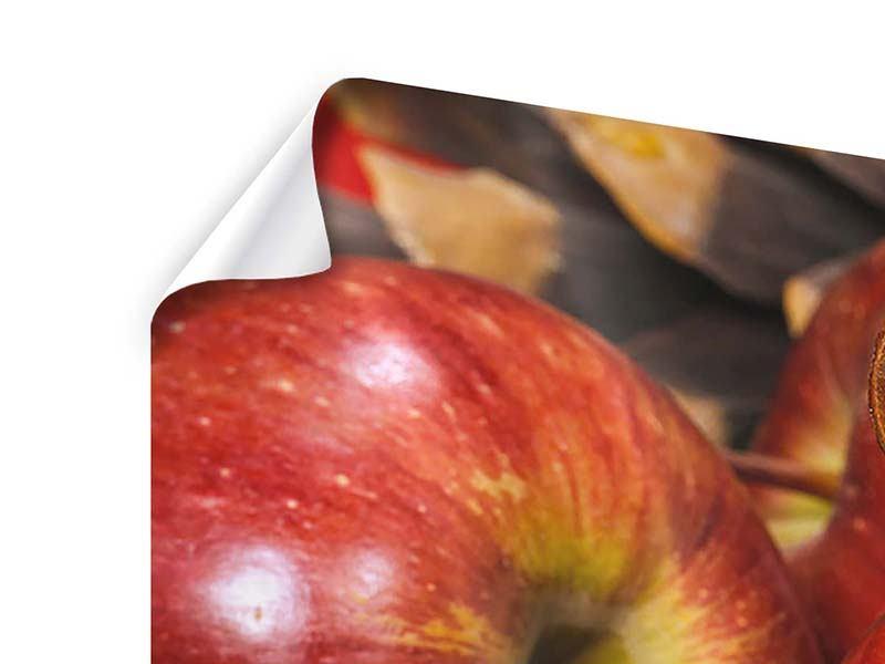 Poster 5-teilig modern Äpfel