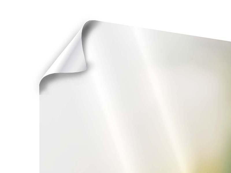 Poster 5-teilig modern Tulpenperspektive