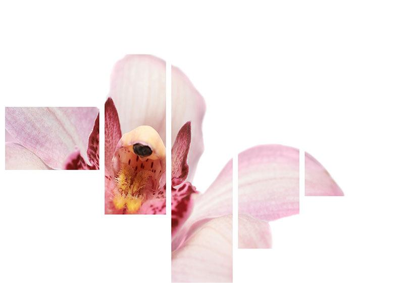 Poster 5-teilig modern Orchideenblüte XXL