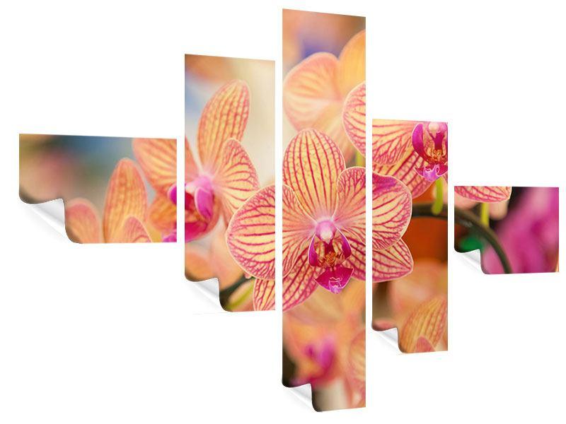 Poster 5-teilig modern Exotische Orchideen