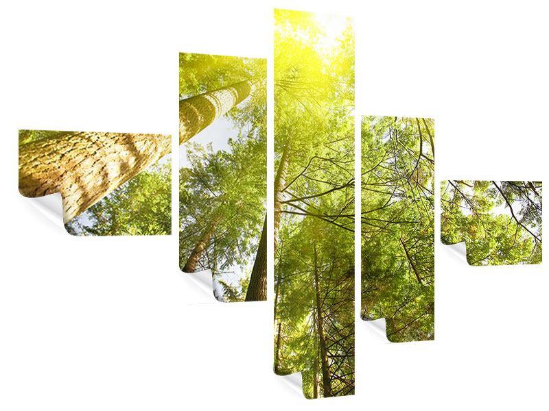Poster 5-teilig modern Baumkronen in der Sonne