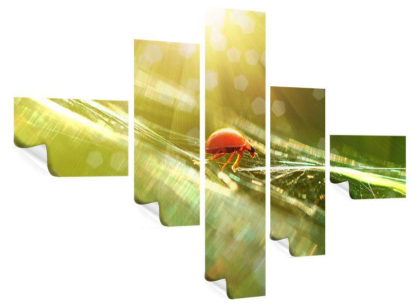 Poster 5-teilig modern Marienkäfer im Sonnenlicht