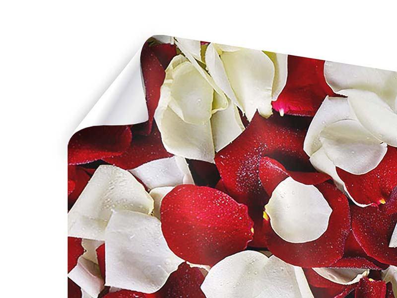 Poster 5-teilig modern Rosenblätter