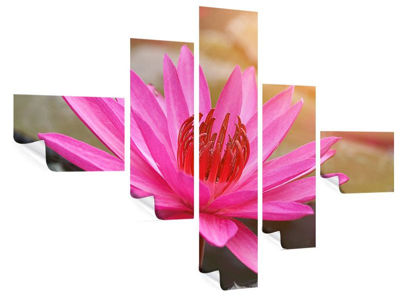 Poster 5-teilig modern Sonnige Seerose