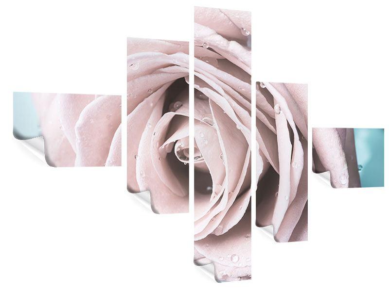 Poster 5-teilig modern Pastellrose