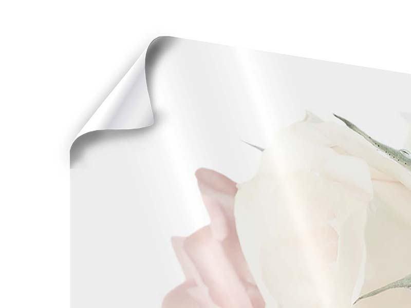 Poster 5-teilig modern Rosenromantik