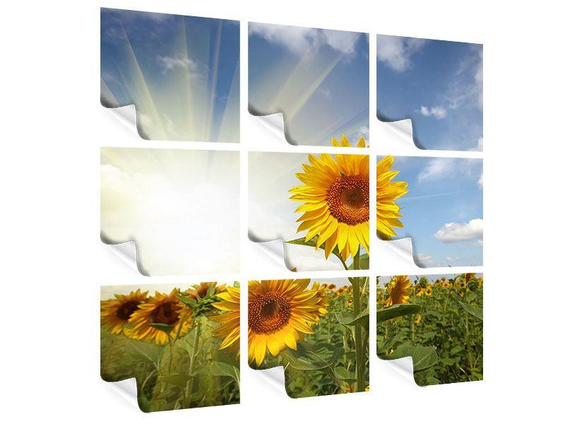 Poster 9-teilig Sonnenblumen im Sonnenlicht