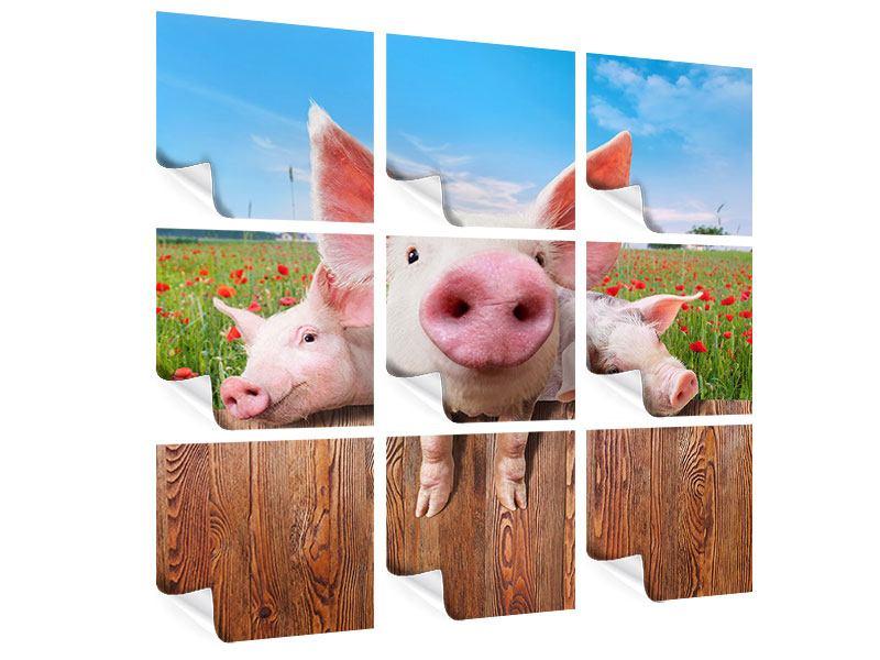 Poster 9-teilig Schweinchen im Glück