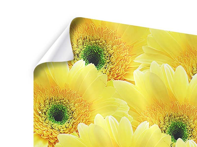 Poster 9-teilig Flower Power Blumen