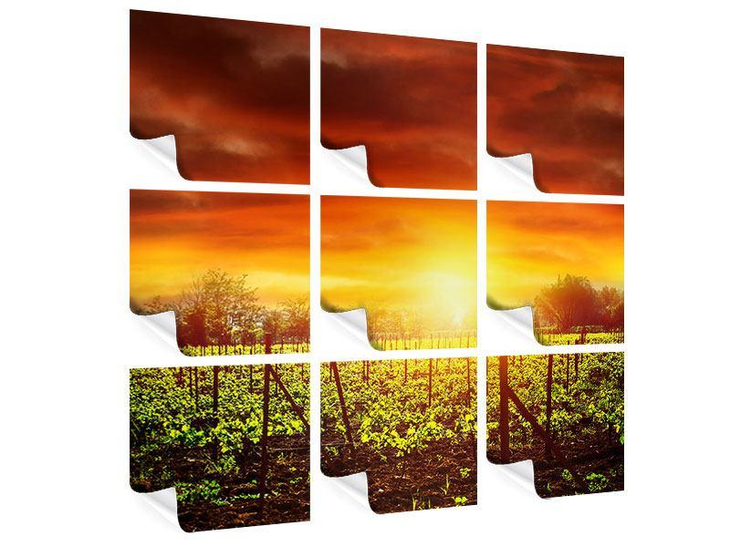 Poster 9-teilig Der Weinberg bei Sonnenuntergang